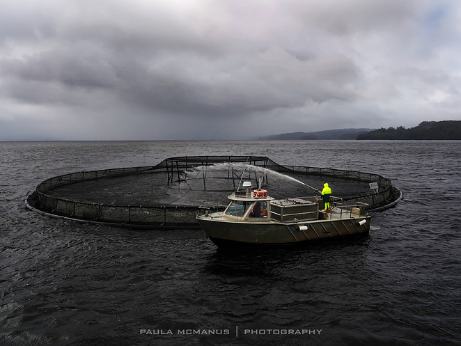 Atlantic Salmon fish farming Strahan Tasmania