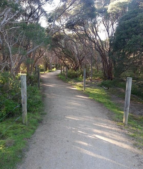 Barwon Heads Village Park, Moonah tree forest