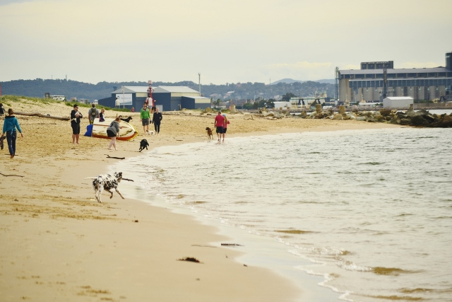 dog beach, dog, horseshoe beach, newcastle, newcastle harbour