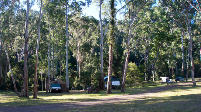 Camping under shady trees at the Mana Gum Camping Ground in the Goomburra Section in the Main Range National Park