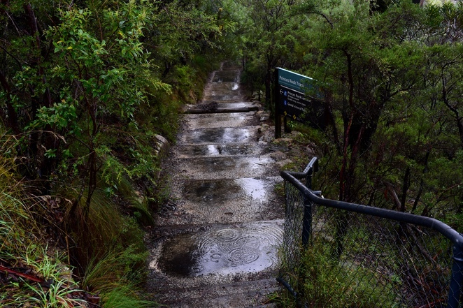 Bushwalking in the rain involves a lot of puddles.