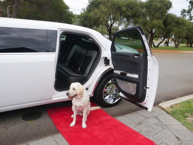 A stylish limo ride for my son, his friends …and our Guide Dog too.