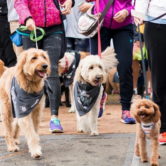 Million Paws Walk RSPCA fundraising