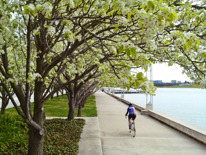 queen elizabeth terrace, canberra, spring flowers, blooms, ACT, walks, lake burley griffin,