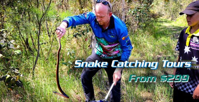 Snake catching tours, Sunshine Coast Snake Catchers 24/7, reptile lovers, up close and personal with snakes, every Tuesday January to April, touch, handle, non-venomous snakes, personal photographer, videographer, merchandise pack, all day, fully licensed, insured, Christmas or birthday gifts, limited space, on standby 24/7, face your fears