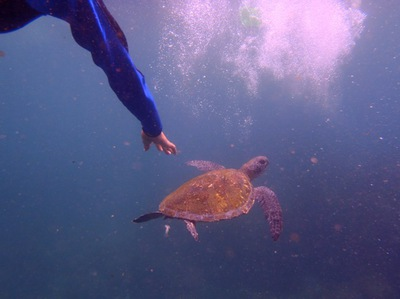 Snorkeling with turtles Byron Bay
