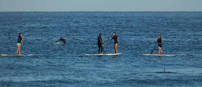 sup pilates liz guilhaus south australia dolphins