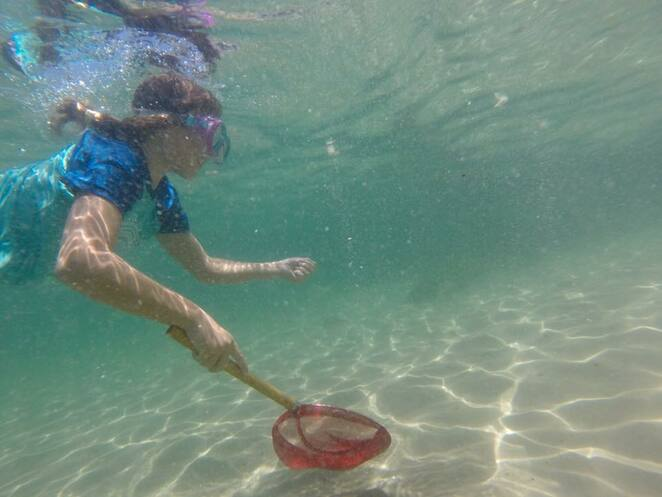 Trying to catch the friendly fish at Wave Break Island