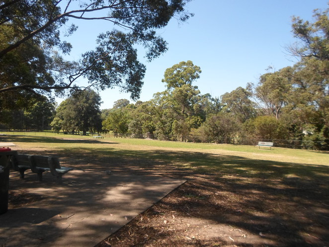asquith oval, asquith park, asquith sportground, asquith dog park, asquith dog friendly