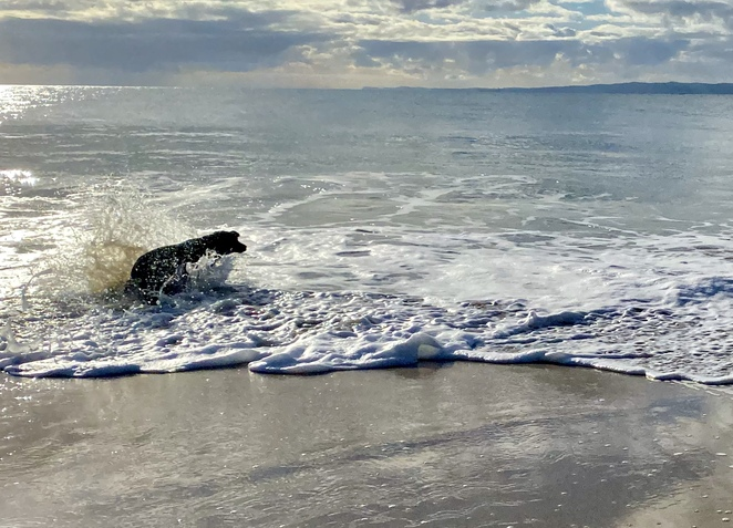 This long stretch of surf beach is an absolute treat for water-loving dogs