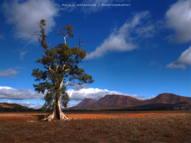 Cazneaux's Tree, Flinders Ranges, South Australia