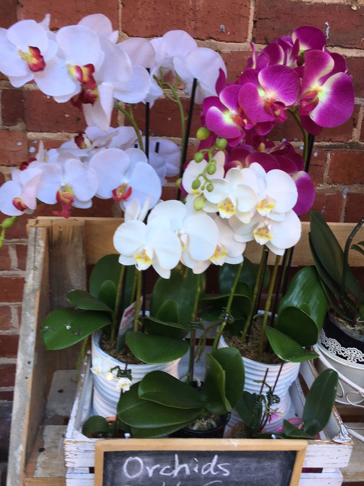 Demystifying Orchids Masterclass Adelaide