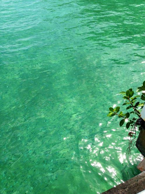 green island, cairns, great barrier reef, tropical, water, sea, island, cairns, holiday