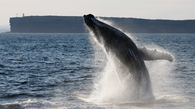 jervis bay wild, huskisson, jervis bay, road trip from canberra, whale watching, dolphin watching, cruises,