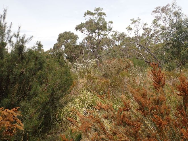 Long Hollow Heathland, reserve, park, Beaumaris, walks, wildflowers, heathland, native plants, nature
