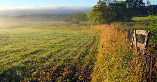 The grass is greener across the border in Northern NSW