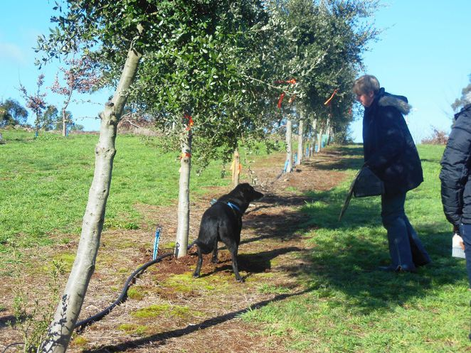 truffle hunt with dog