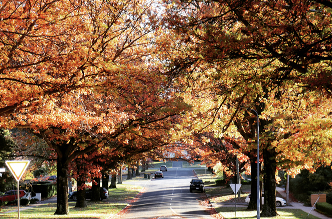 Canberra, trees, autumn, leaves, walks, photography