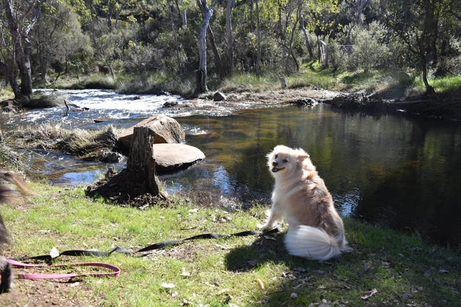 dog friendly hike, Perth Hills, family friendly hike, picnic area, day trip