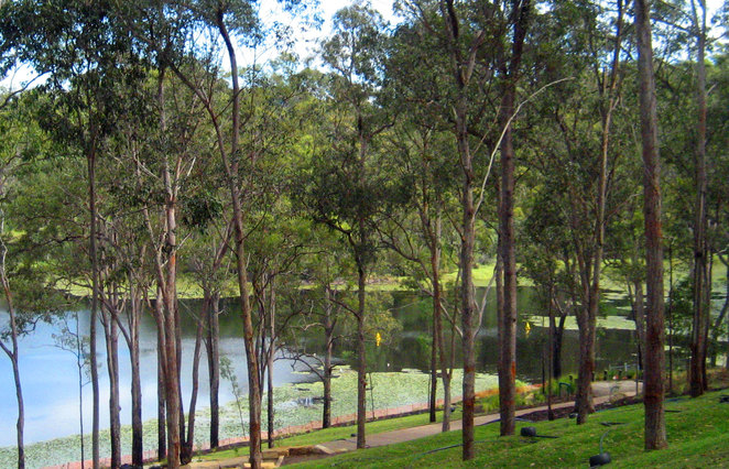 Enoggera Resevoir has a nice green bank to spread a blanket for a picnic