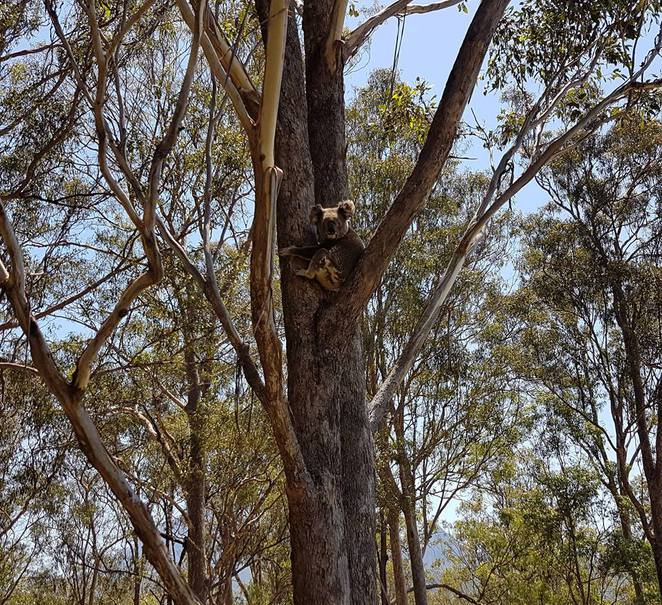 Farmstays in Queensland, Wittacork Dairy Cottages, Maleny, milk and feed animals, rainforest walks, farm walks, alpacas, miniature pigs, Dexter cows, poultry, sustainability workshops, Lamington National Park, boomerang throwing, whip cracking, billy tea and damper, Twilight Mountain 4WD tour, fishing, rowing, kayaking, hedge maze, collect eggs, lasso, picnics, cow milking, feed baby kangaroos, self-contained accommodation, Maleny, Beerwah, Beaudesert, Scenic Rim, Mount Barney