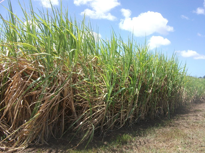 Jacobs Well, Country drive, sugar cane, picnic