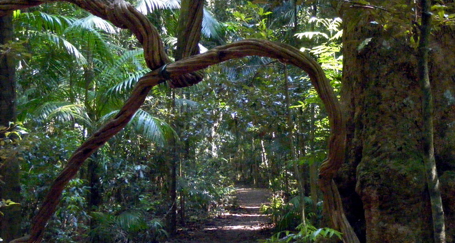 Mary Cairncross Reserve is a beautiful pocket of old growth rainforest