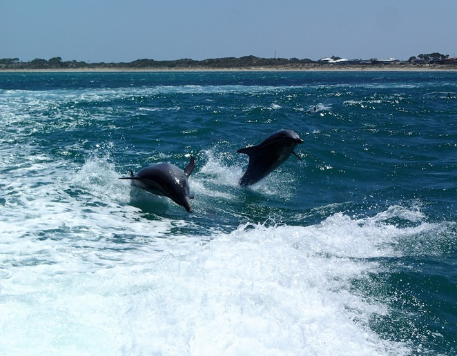 Shoalwater Bay Dolphins