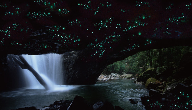 Springbrook National Park Glow Worms