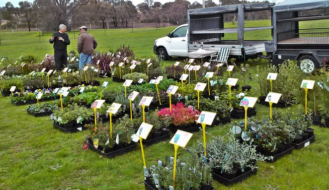 tuggeranong homestead markets, canberra, ACT, cheap plants, nurseries, plants, markets,