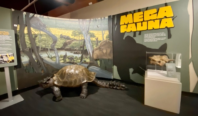 Discover megafauna at the Cobb n Co Museum
