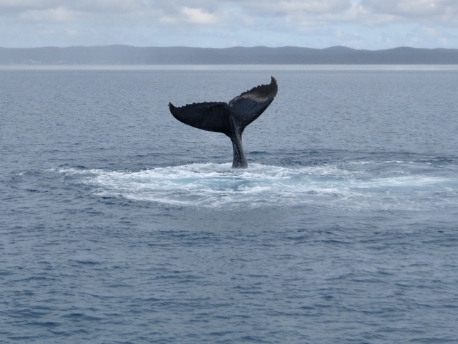 Eden Whale Festival, whale watching Eden, far south coast festivals, far south coast whale watching, Things to do in Eden