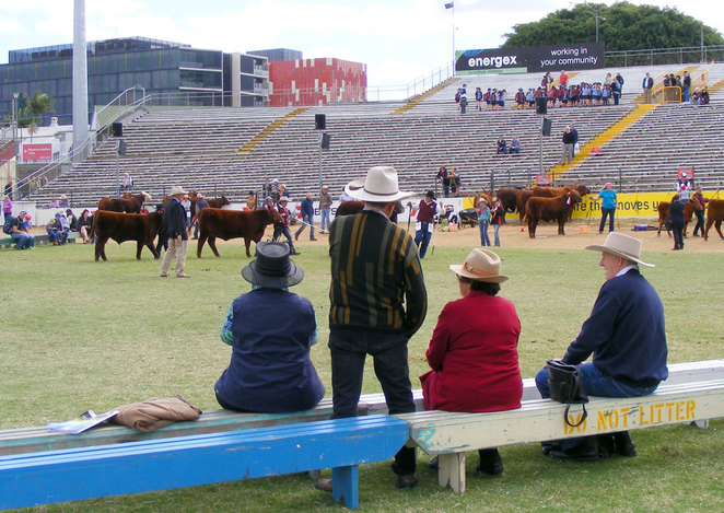 At Ekka, the country really comes to the city