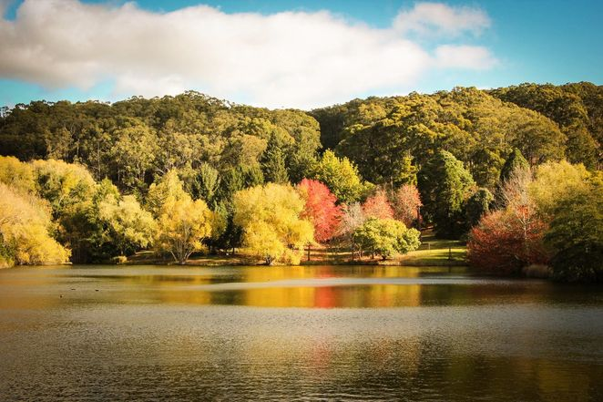 Mount Lofty Botanic Garden, Botanic Garden, mount lofty, adelaide, 40th birthday, free, autumn colours