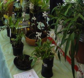 Orchid flowers on display Canberra Spring Orchid Show