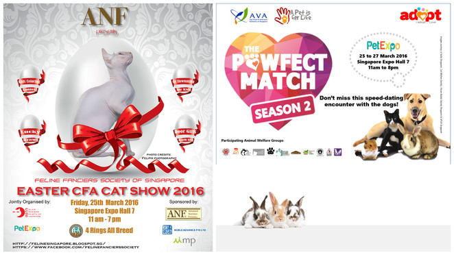 pet expo, pet fair singapore, singapore pet, pet show, pet competition, singapore expo, pet adoption drive, free event