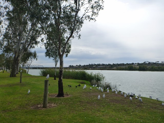 Sturt Reserve Murray Bridge