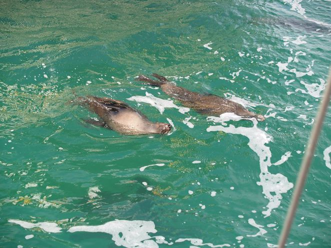 swim with dolphins melbourne, polperro dolphin swim review