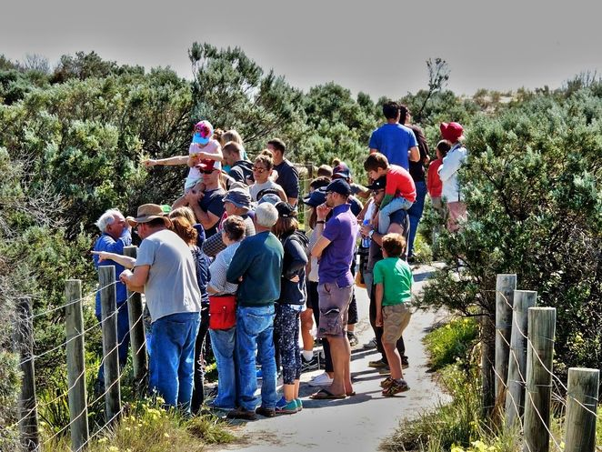 tennyson dunes open day, tennyson dunes, open day, friends of the tennyson dunes, west lakes, flora and fauna, free things to do, activities for kids, fun things to do, free guided tours