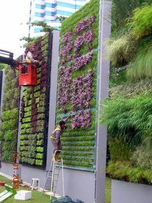 Vertical Garden, gardening, plants, summer