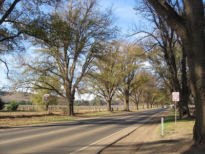 The Avenue of Honour in Bacchus Marsh, Victoria