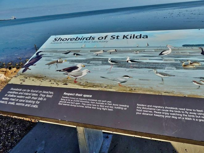 Adelaide Shorebirds Festival, november, Adelaide International Bird Sanctuary, birds, free, things to do, st kilda, bird, park, shorebirds