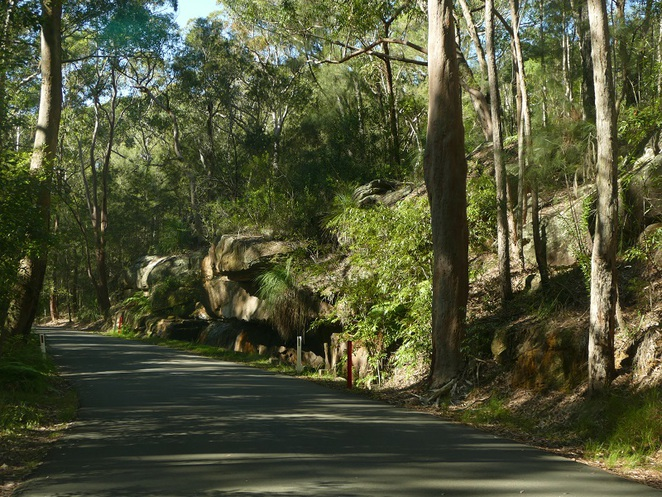 Lane Cove National Park, North Ryde, NSW