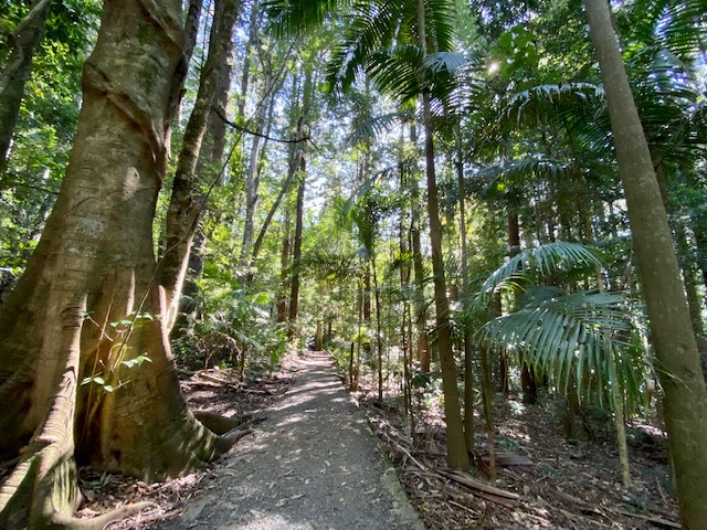 Cool walks through ancient rainforest are one of the main attractions at Maiala