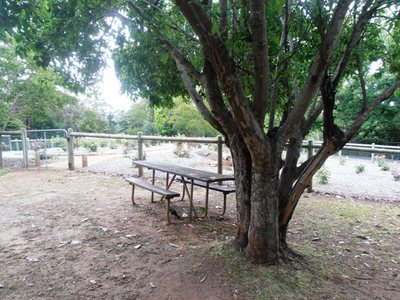 One of the many beautiful picnic spots overlooking the Mundaring Weir.