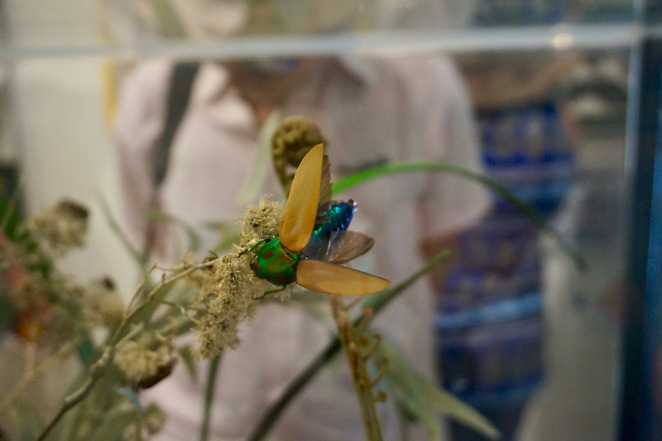 One of the dazzling beetles