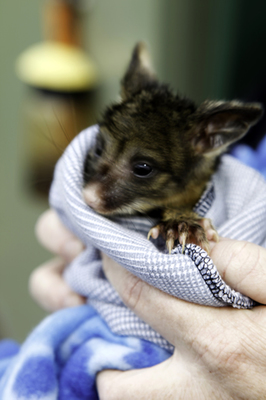 This image is from the Darling Range Wildlife Shelter website.