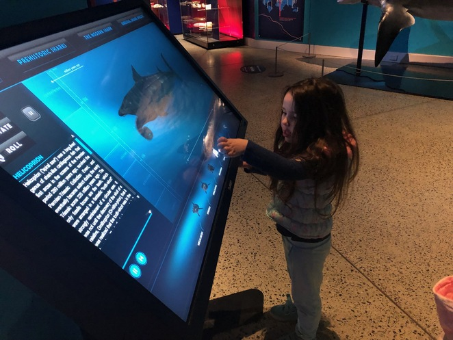 Planet Shark: Prey or Predator, WA Maritime Museum, Fremantle Exhibitions, Fremantle Museums, sharks WA, family exhibitions Perth, school holidays Perth