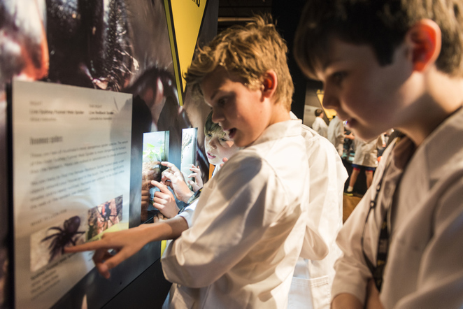 Spiders Alive and Deadly Australian Museum Exhibition