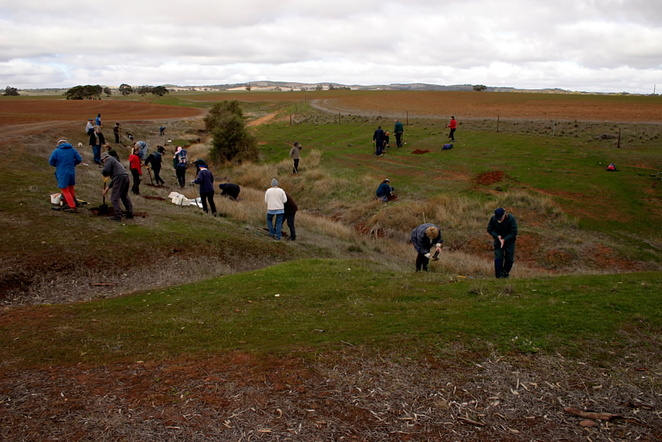 Tarcowie Landcare tree planting